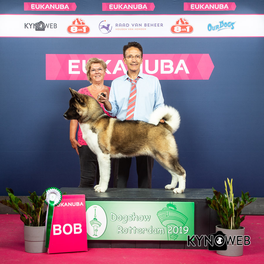 BEST OF BREED 636 LR ROTTERDAM 2019 Honest Chie of the Wild Canyon